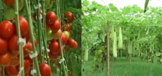 गाउँपालिकाले सामूहिकरुपमा कृषि व्यवसायमा लाग्ने कृषकलाई प्रोत्साहन