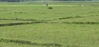 झरनालाई एक कठ्ठा जमिन दिने